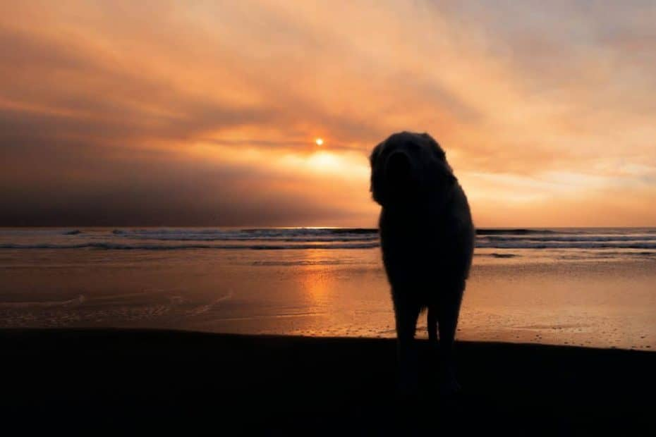 Oregon silhouette 1030x687 1