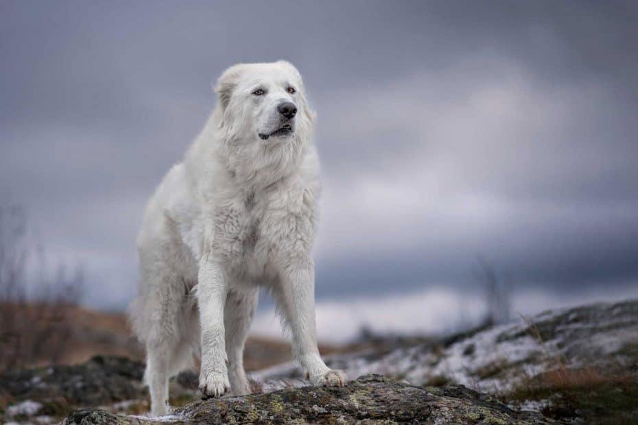 Bella at Saltese uplands 1