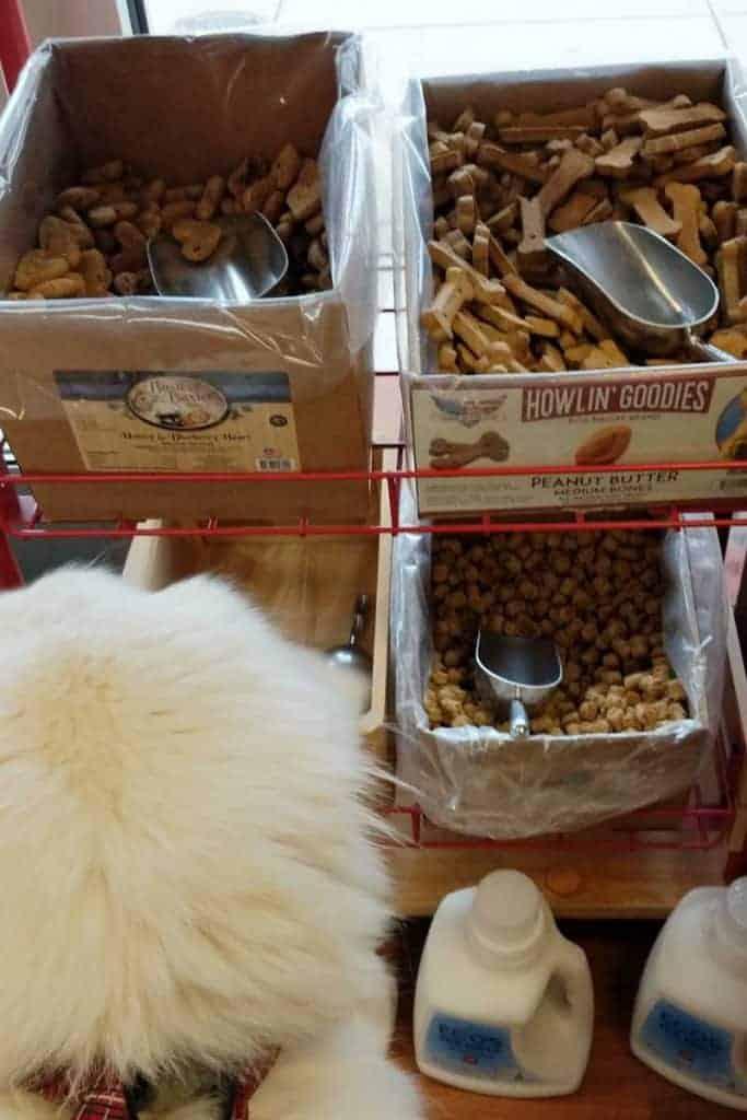 treats at a dog boutique in Post Falls Idaho