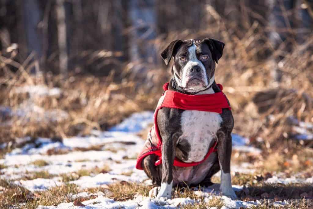 sandpoint shelter dog