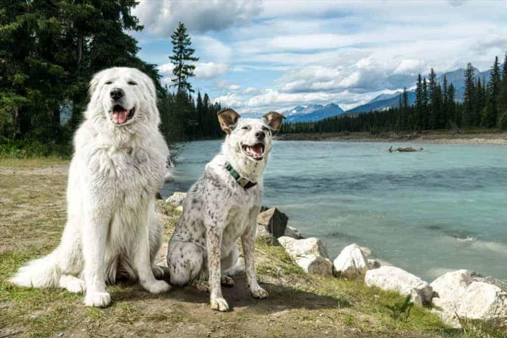 Bella and Newt at Kootenai River 1030x687 1
