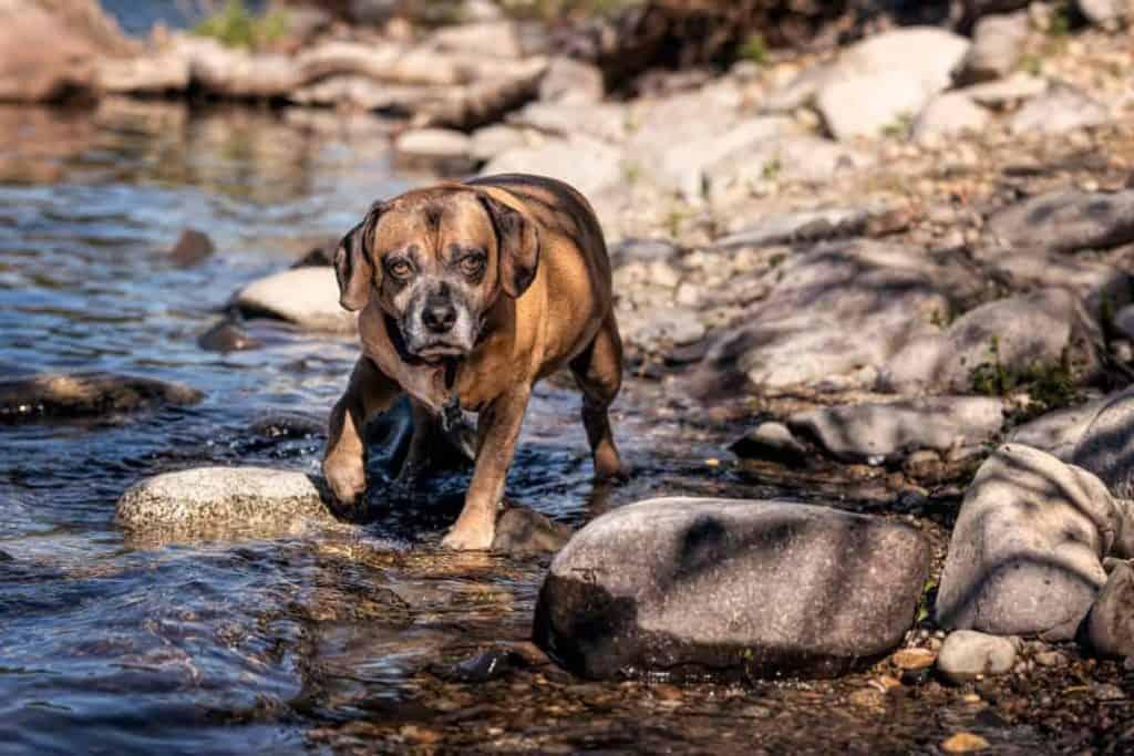 Dexter in Spokane River 1030x687 1