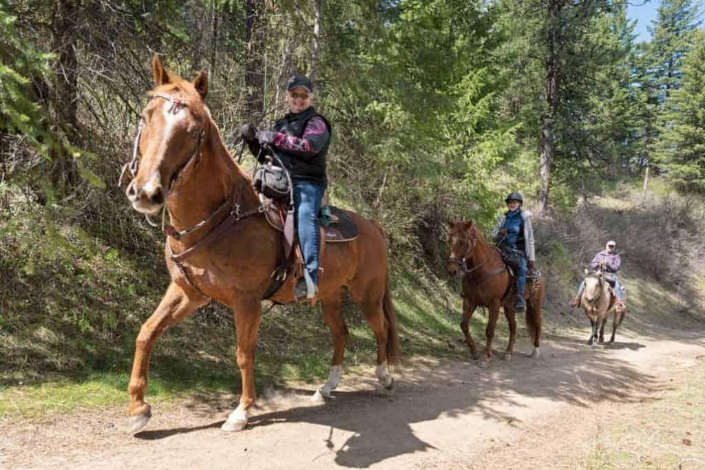Horses 1030x687 1