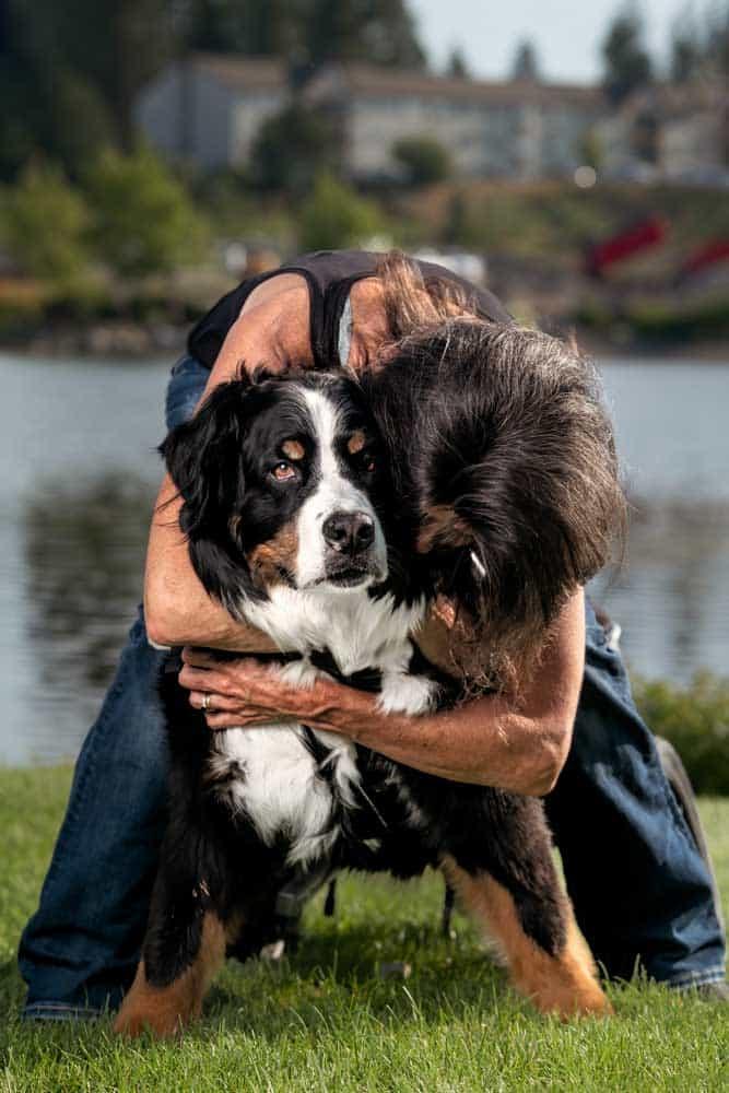 woman hugs Bernese Mountain Dog with degenerative myelopathy