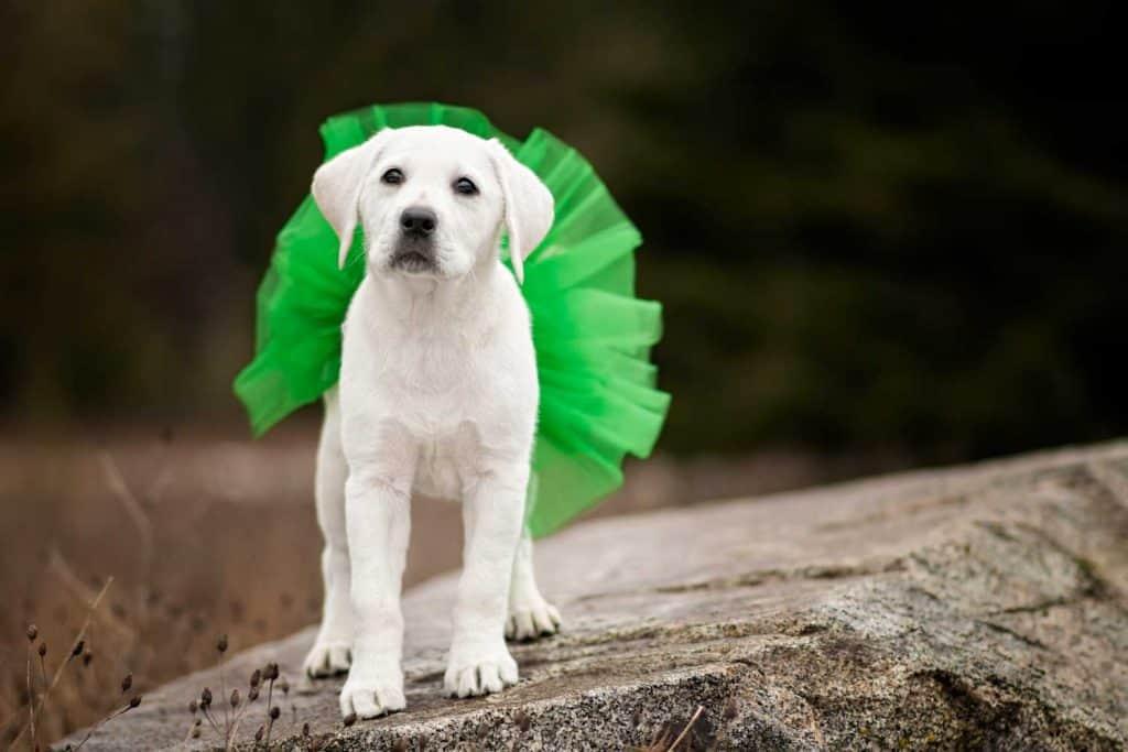 Twyla green tutu