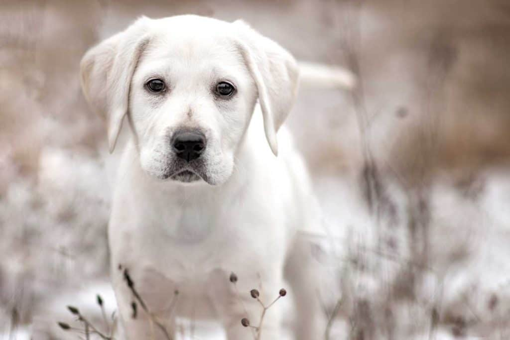 north idaho rescue dog