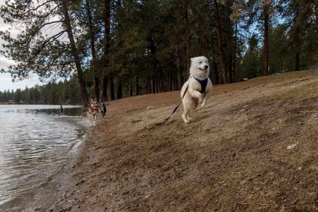 Wrangler running on Boulder Beach