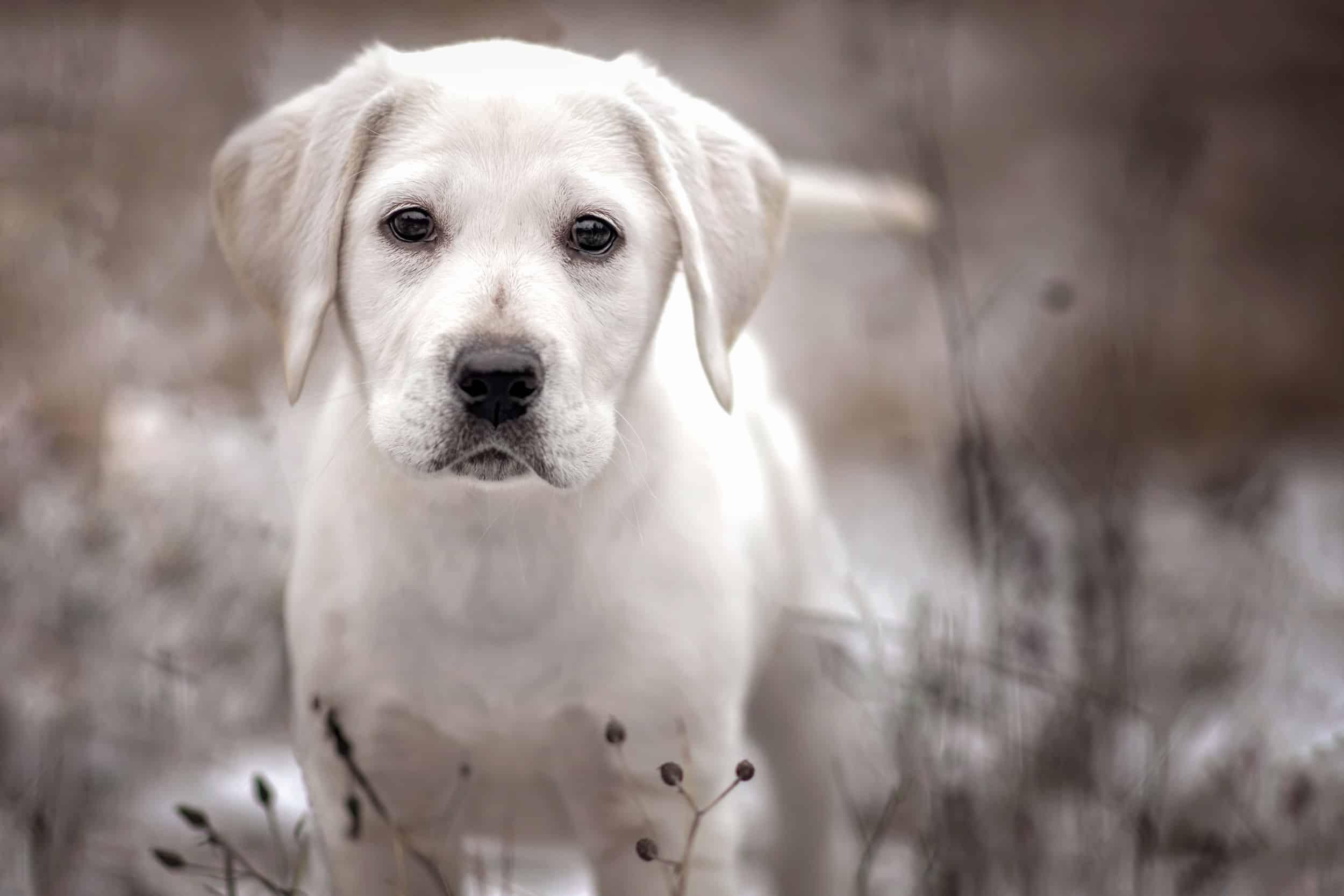 Twyla megaesophagus rescue dogs in Idaho