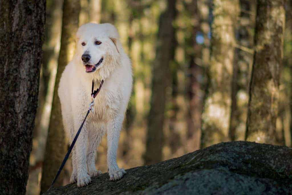 Bella hiking