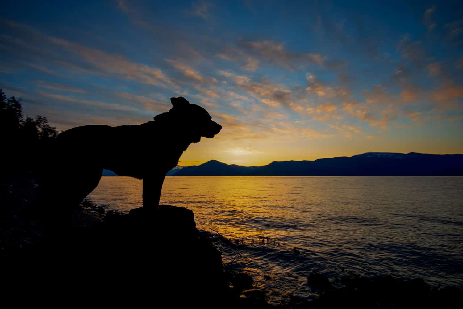Dog in silhouette on Pend Oreille Lake in North Idaho
