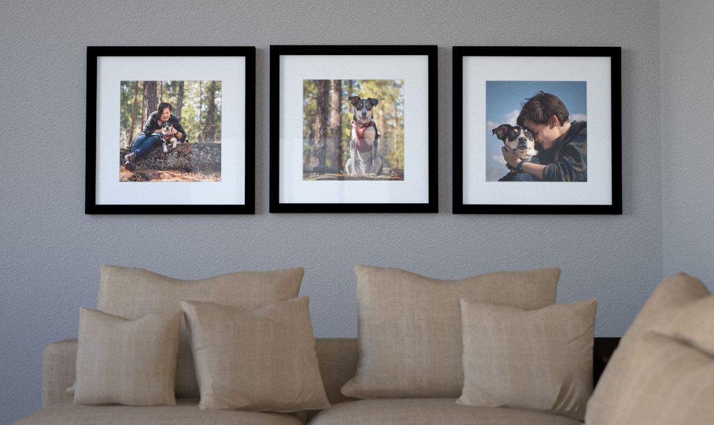 Framed prints from a dog photography session