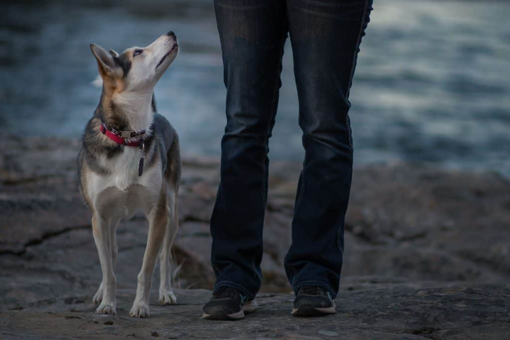 Husky with her owner on Spokane River at Post Falls Community Forest
