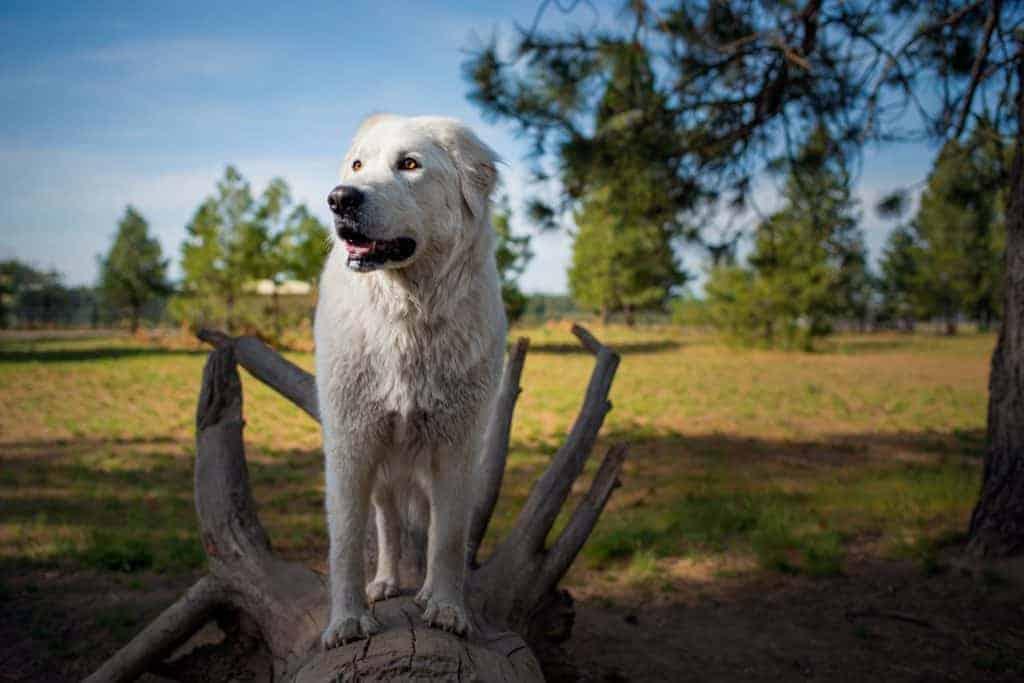 Bella investigating dog parks near me