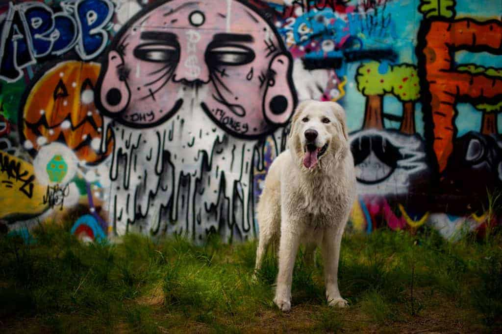 Graffiti wall at High Bridge Dog Park in Spokane