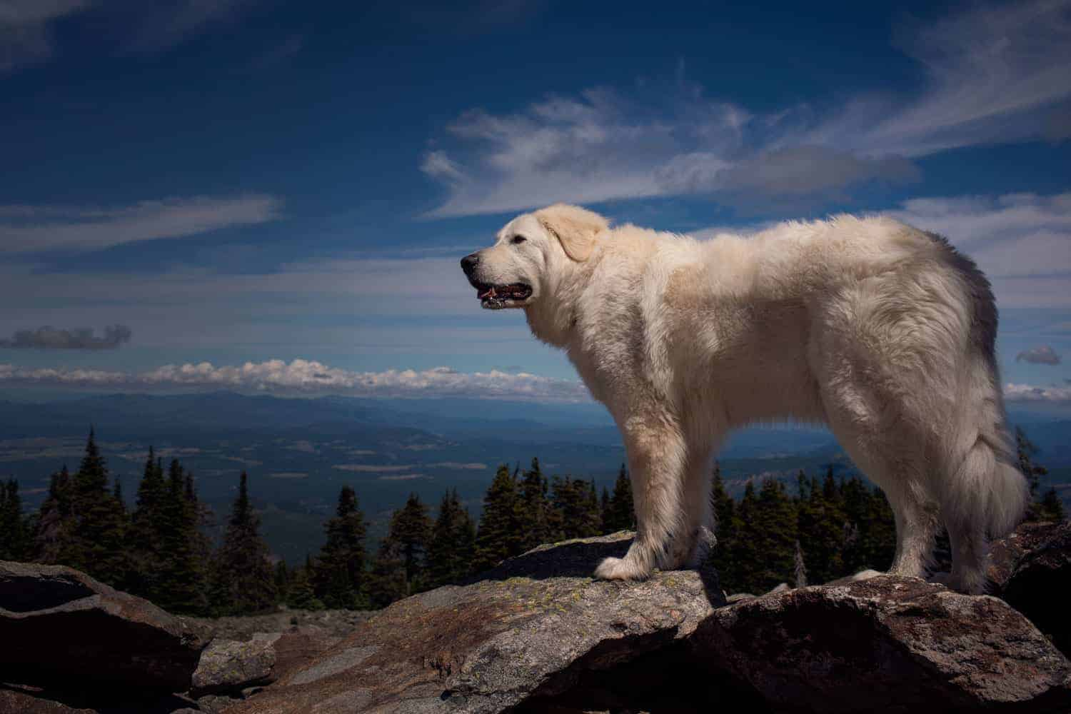 Bella on the trail up to Vista House at Mt Spokane State Park