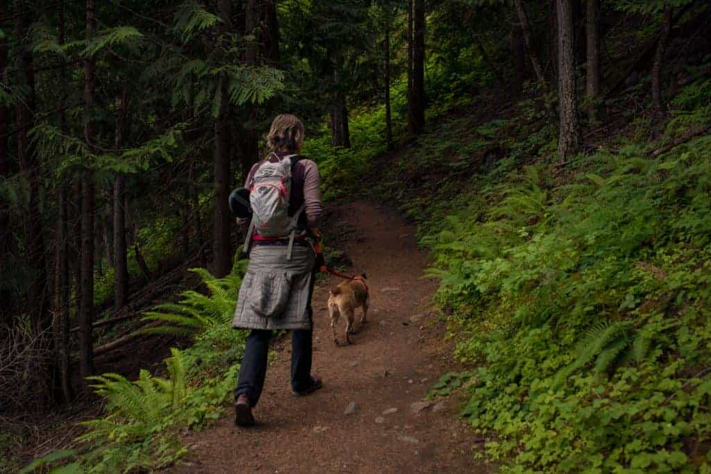 hiking with dogs in North Idaho
