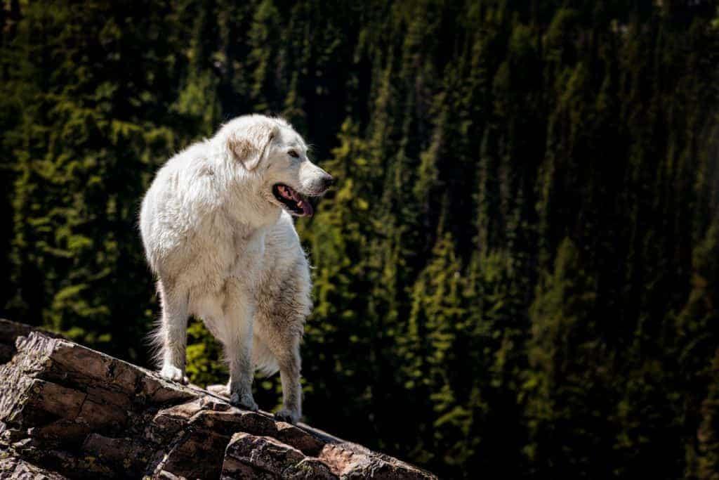 Bella on the Revett Lake trail in North Idaho