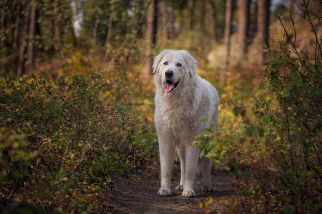 dog portraits in woods at Mirabeau Park
