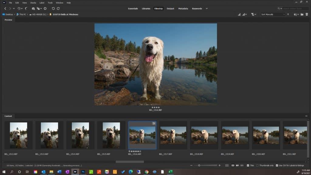 a gallery of dog photos in Adobe Bridge