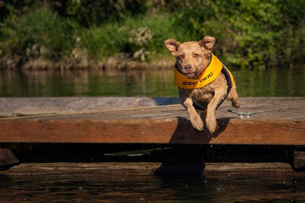 dock diving dog in Sandpoint, Idaho