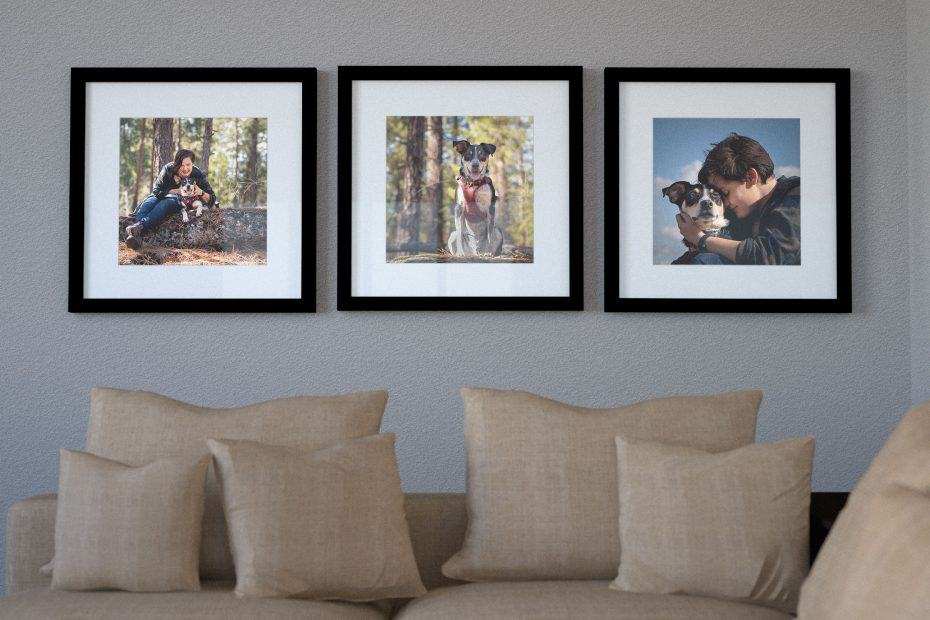 framed prints of a dog hiking at Dishman Hills