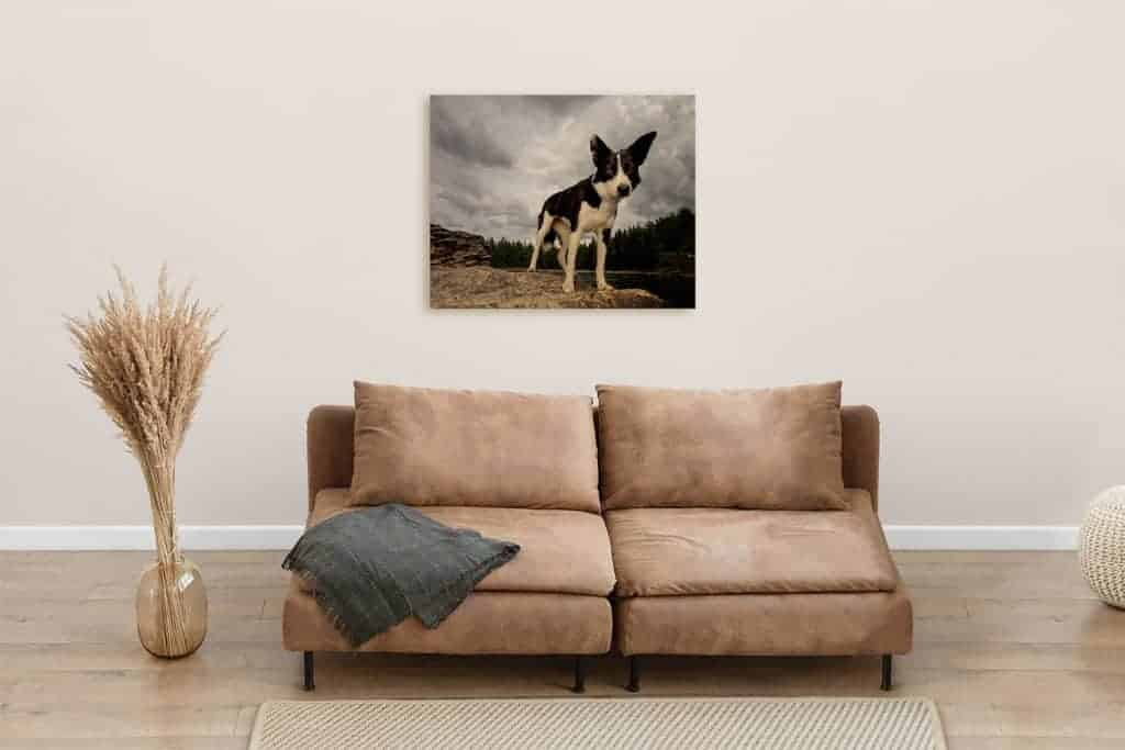 living room Statement piece of a border collie