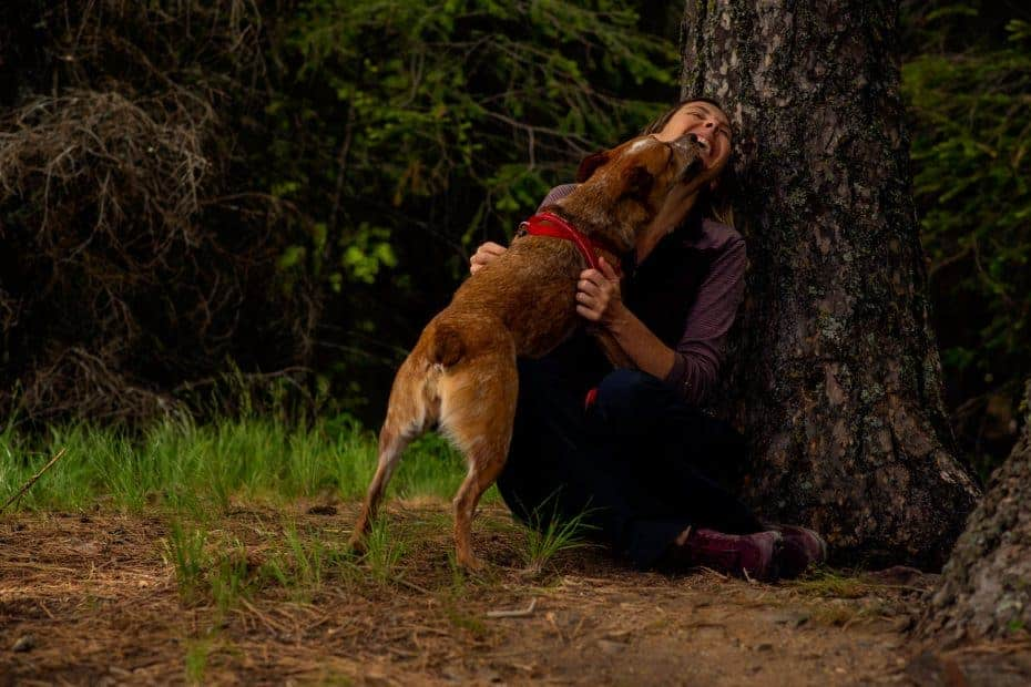 heeler and woman on a hike in north idaho