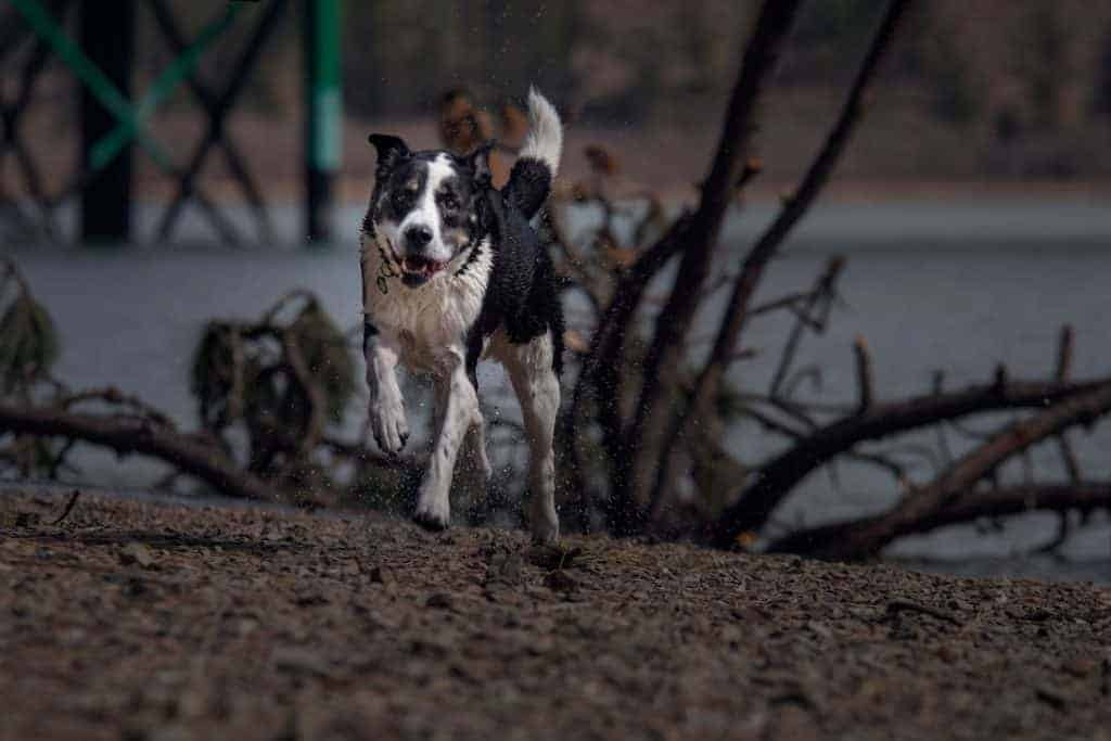 fun dog photography session in coeur d'alene