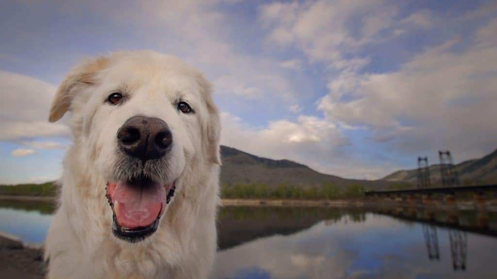 Dog photos in wide angle on the Thompson River in Kamloops, B.C.