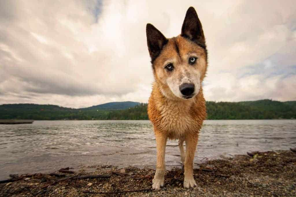 Balto Park in Sandpoint is a great location for dog photos in wide angle