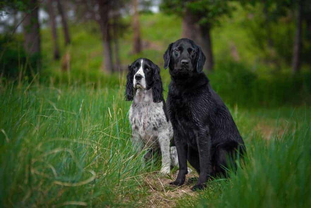 two dogs at Farragut State Park in Idaho