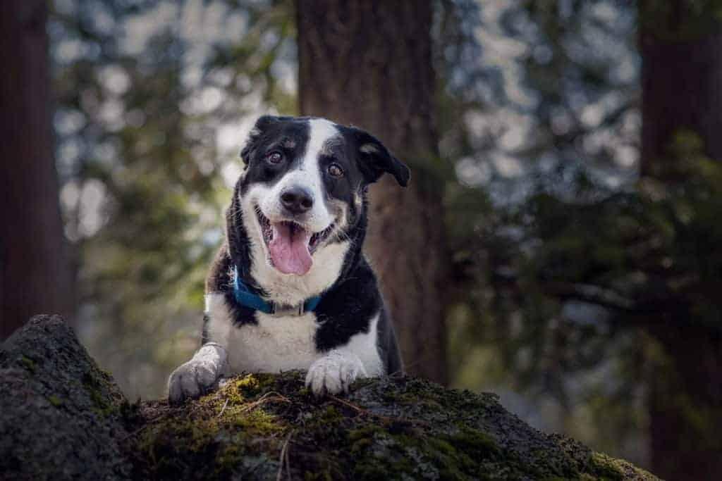 dog enjoying his day at Higgens Point