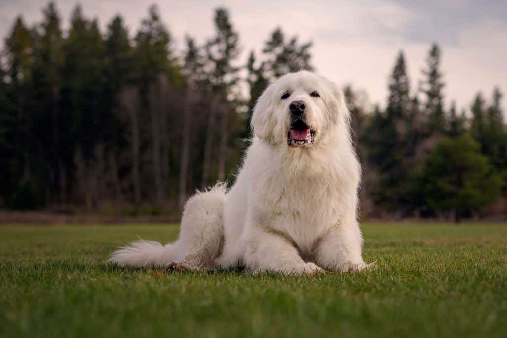 Beautiful dog portraits can help heal after losing a pet