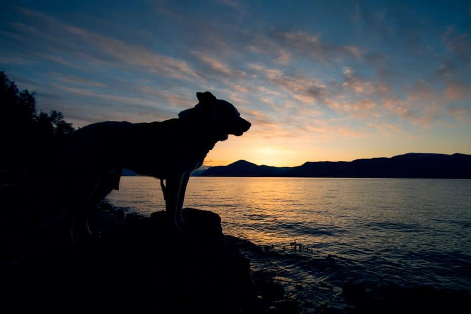 dog at sunrise at evans landing in north Idaho