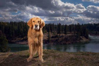 Desi-Spokane-adventure-dogs