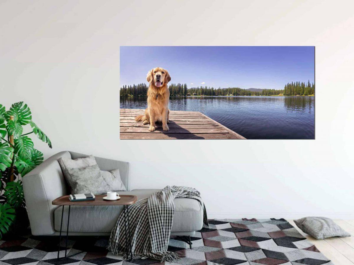Desi-panoramic-dog-portrait.jpg