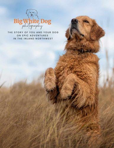 spokane dog photography inquiry guide