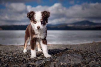Pupppy-at-Hauser-Lake
