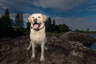 Yellow-lab-at-Coyote-Rocks